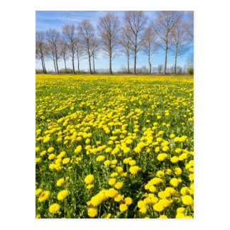 Field of yellow dandelions in grass with tree line postcard