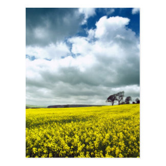 Field of yellow postcard