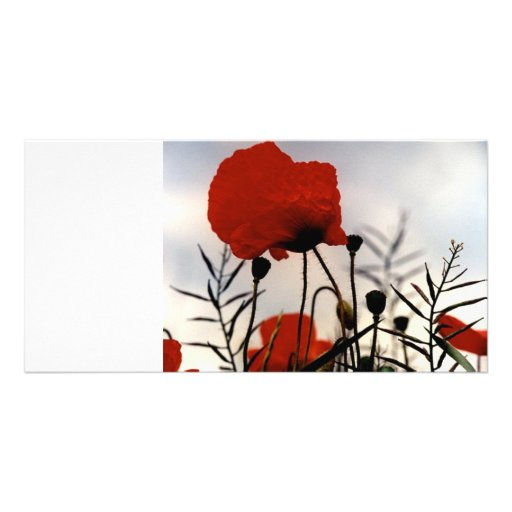 Field Poppies Photo Card