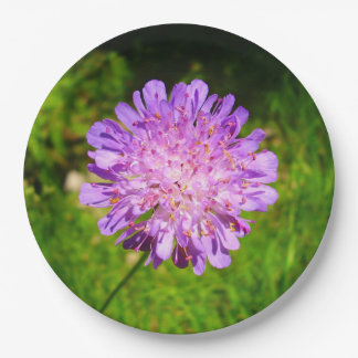 Field Scabious Paper Plates 9 Inch Paper Plate