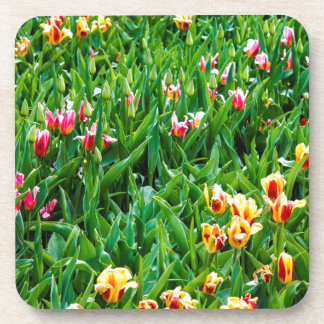 Field with Pink and Yellow Tulips Coaster