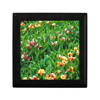 Field with Pink and Yellow Tulips Gift Box