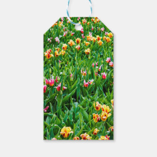 Field with Pink and Yellow Tulips Gift Tags