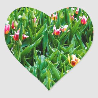 Field with Pink and Yellow Tulips Heart Sticker
