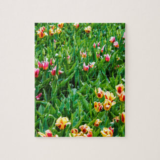 Field with Pink and Yellow Tulips Jigsaw Puzzle