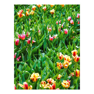 Field with Pink and Yellow Tulips Letterhead