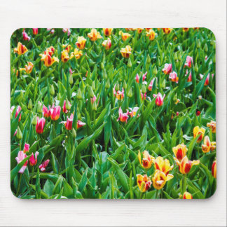 Field with Pink and Yellow Tulips Mouse Pad