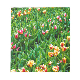 Field with Pink and Yellow Tulips Notepad