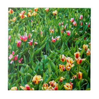 Field with Pink and Yellow Tulips Tile