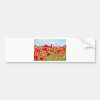 Field with red papavers bumper sticker