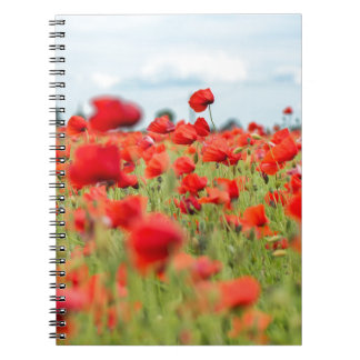 Field with red papavers notebook