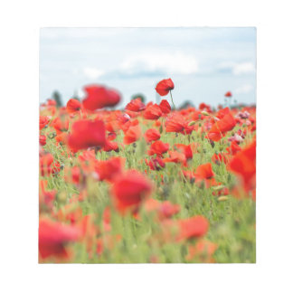 Field with red papavers notepad