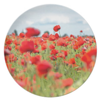Field with red papavers plate