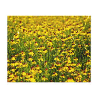 Field Yellow Wildflowers Photo Canvas