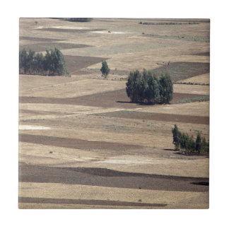 Fields after harvest ceramic tile