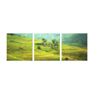 Fields golden delicious canvas print