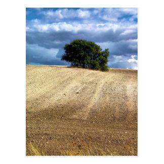 Fields of culture in Valdelaguna, Madrid Postcard