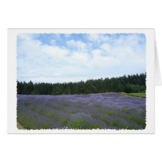 Fields of lavender card