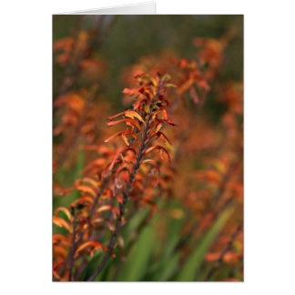 Fields of orange glow card