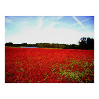 Fields of Rubies Poster