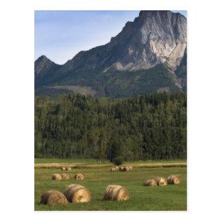 Fields with bailed hay, Alberta, Canada Postcard