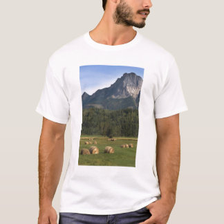 Fields with bailed hay, Alberta, Canada T-Shirt