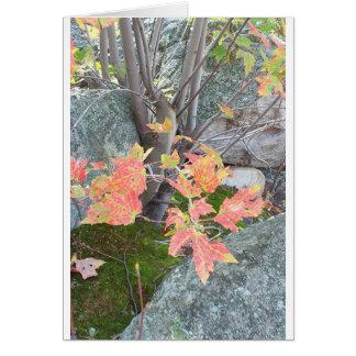 Fiery Leaves Card