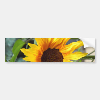 Fiery Sunflower Bumper Sticker