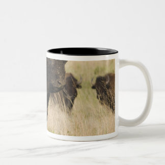Fiesty young bison bull at the Tallgrass Two-Tone Coffee Mug