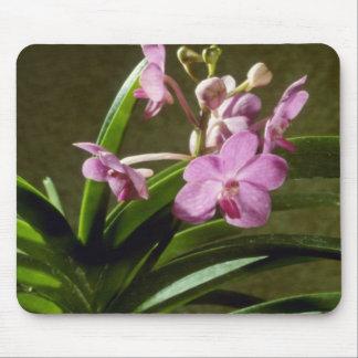 Fiftieth State Beauty, Mayumi (Ascocenda) flow Mousepads