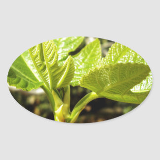 Fig Leaves Oval Sticker