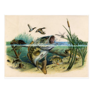 Fighting Bass Postcard