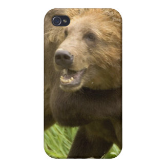 Fighting Bears iPhone 4 Case