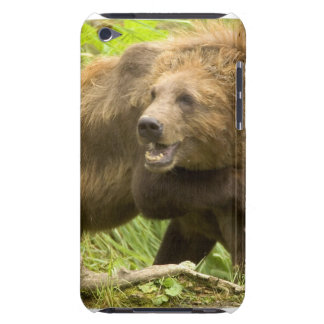 Fighting Bears iTouch Case iPod Touch Case