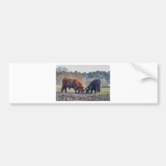 Fighting black and brown scottisch highlander bull bumper sticker