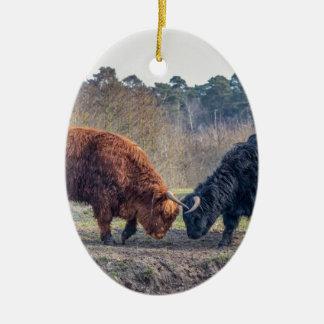 Fighting black and brown scottisch highlander bull ceramic oval ornament