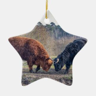 Fighting black and brown scottisch highlander bull ceramic star ornament