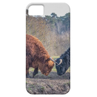 Fighting black and brown scottisch highlander bull iPhone 5 cases