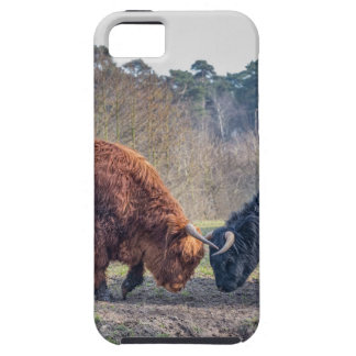 Fighting black and brown scottisch highlander bull iPhone 5 covers