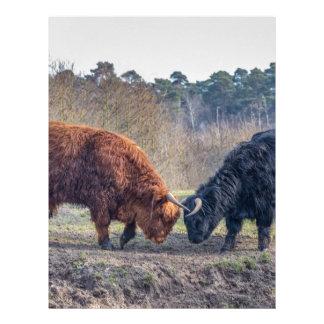 Fighting black and brown scottisch highlander bull letterhead design