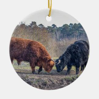 Fighting black and brown scottisch highlander bull round ceramic ornament