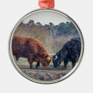 Fighting black and brown scottisch highlander bull Silver-Colored round ornament