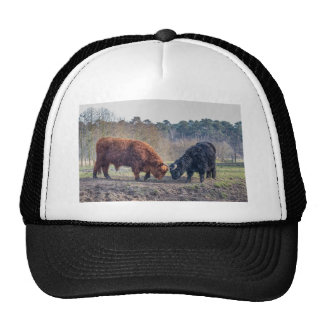 Fighting black and brown scottisch highlander bull trucker hat