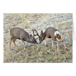 Fighting Mule Deer customize Card