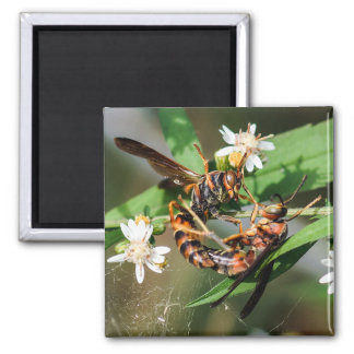 Fighting Paper Wasps Magnet