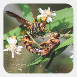 Fighting Paper Wasps Sticker
