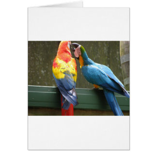 Fighting Parrots Card
