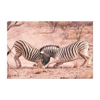 Fighting Zebras Canvas Print