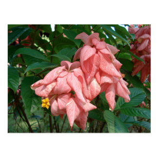 Fiji Pink and Yellow Flower Postcard