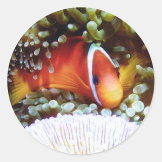 Fiji Tomato Clown Classic Round Sticker